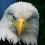 superstition-aigle