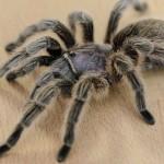 Superstitions araignée