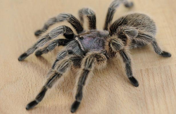 Superstition et araign e signification for Signification des couleurs dans une maison