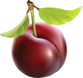 Le fruit prune