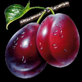 Le fruit quetsche