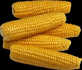 Le légume Maïs