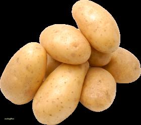 Le légume Pomme de terre