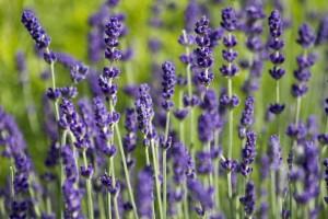Pouvoir des plantes - propriétés et bienfaits