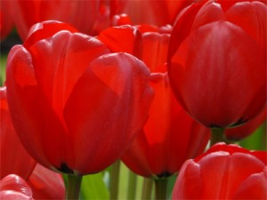 Fête du 20 Mars : Saint Herbert